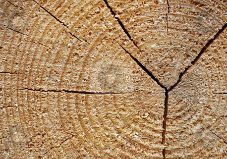 Tree stump - wooden background stock photo, Old rough tree stump - natural wooden background by Alexey Romanov