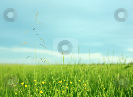 Landscape with a grass in the foreground stock photo, Landscape with a green grass in the foreground and horizon by Alexey Romanov