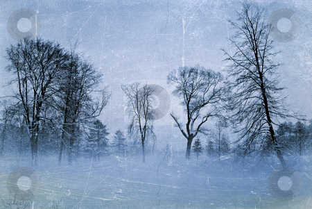 Winter trees stock photo, vintage grungy winter trees background by matthi