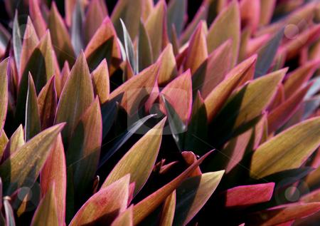 Purlplish Tropical Leaves stock photo, Backlit Purlplish Tropical Leaves by Chris Hill