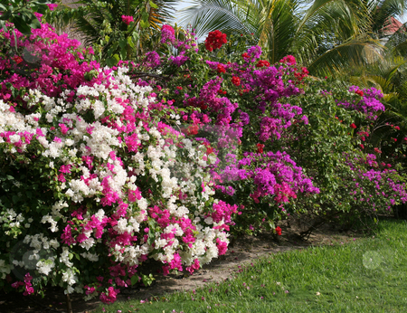 Mexican Garden stock photo, A tropical garden featuring a row of flowers.  by Chris Hill