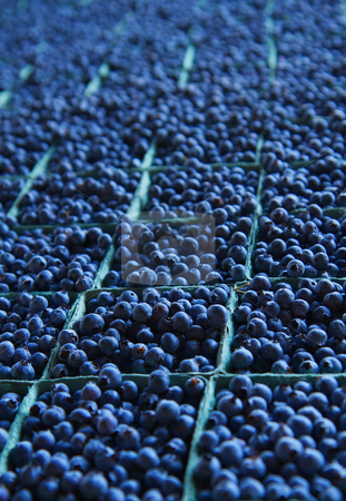 Miles of Blueberries stock photo, Large table full of dozens of blueberry baskets trailing to soft focus background by bobkeenan