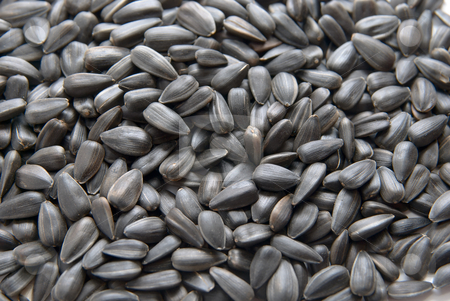 Sunflower seed stock photo, Close-up of Sunflower seed. texture background by olinchuk
