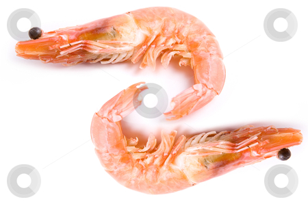 Two Shrimps stock photo, Two Shrimps isolated on white background by olinchuk