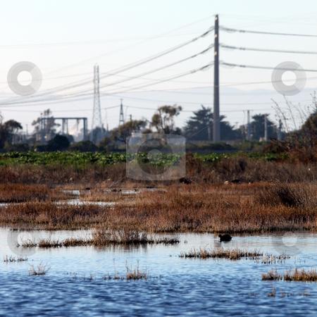 Bog wetland stock photo, wetland near the Ormond Beach california oxnard by Henrik Lehnerer
