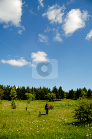 Horse on medaow stock photo, A horse is standing on a green medaow, at a summer day, with trees in the background. by Lars Christensen