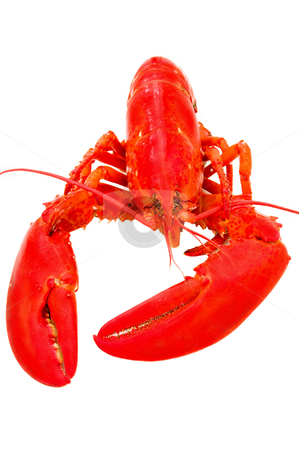 seafood lobster stock photo, closeup detail cooked red lobster studio white background by JOSEPH S.L. TAN MATT