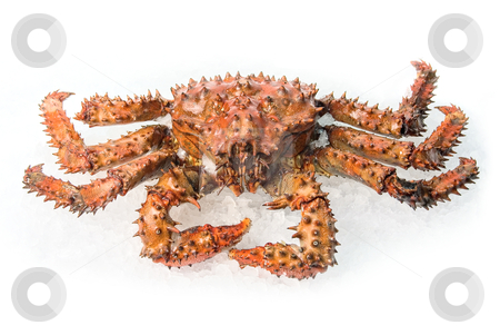 King crab  stock photo, The King crab on a white ice background by olinchuk