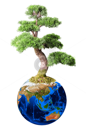 Bonsai from earth planet stock photo, Bonsai from earth planet isolated on white concept by olinchuk