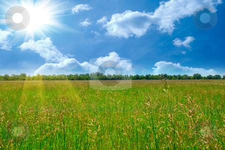 Summer time stock photo, Field of green grass and perfect blue sky by olinchuk