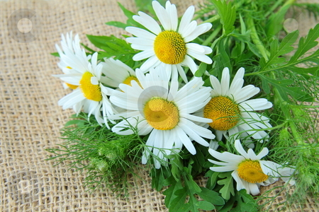 - cutcaster-photo-801067703-bouquet-of-daisies-on-the-linen-bag-rural-background