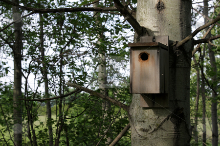 Birdhouse on a Tree stock photo, A birdhouse nailed to a tree. by Chris Hill