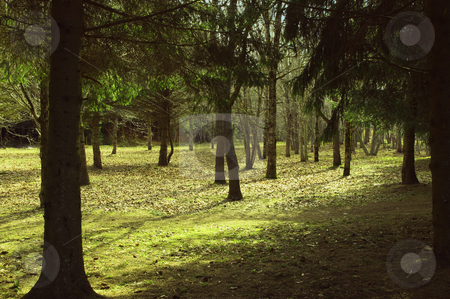 Spring in forest stock photo, view of light and shade in spring forest in the morning by JelenaKa7