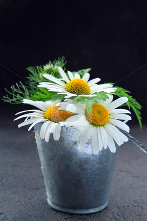 - cutcaster-photo-801069820-bouquet-of-daisies-in-a-bucket-on-a-black-background