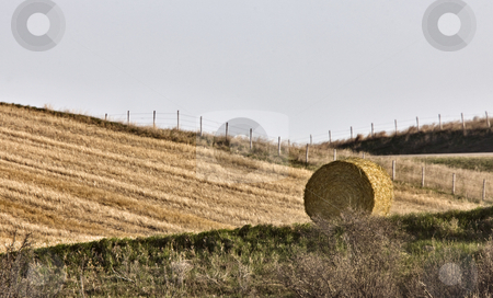 Hay Bale  stock photo, Hay Bale  against a newly swathed field by Mark Duffy