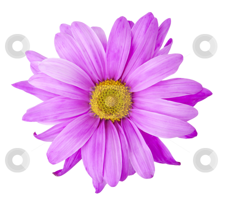 Purple Flower - Photo Object stock photo, Purple flower, with clipping path by Bryan Mullennix
