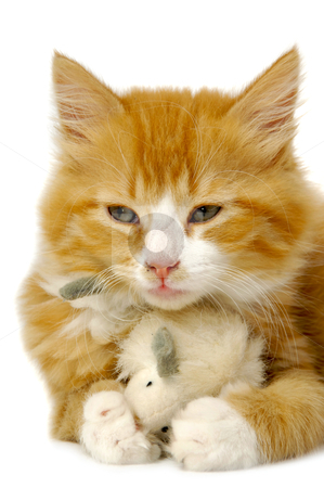 Kitten with mouse stock photo, A sweet kitten is holding a toy mouse. by Lars Christensen