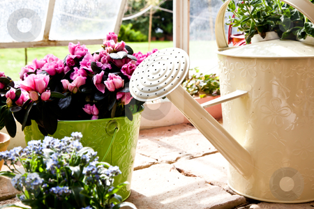 Garden - Watering can stock photo, Watering cans, concept of gardening and hobby by Perseomedusa