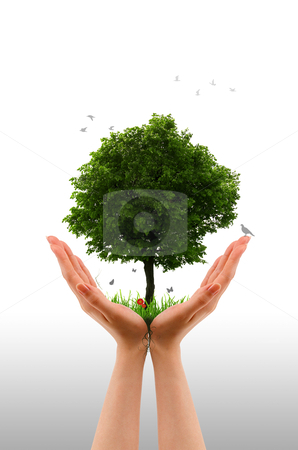 Tree alive  - Hand stock photo, High resolution graphic of hands holding a tree.  by kbuntu