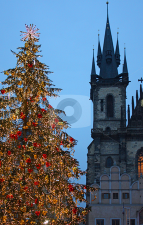 Christmas tree in Prague - vertical stock photo, Christmas tree in Prague, in front of the Tyn Church by Perseomedusa