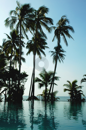 Coconut trees on the beach stock photo, Silhouette of coconut trees against blue sky on the beach by John Young