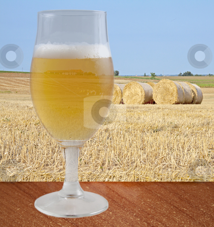 Beer stock photo, A glass of beer over a wooden table, with field on the background by Fabio Alcini