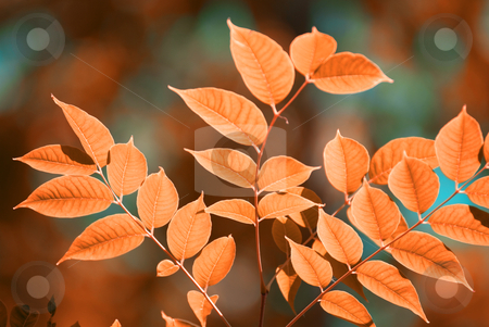 Autumn leaves stock photo, autumn leaves, very shallow focus by olinchuk