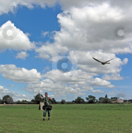 Falconary stock photo, man and bird doing falconary by lizapixels
