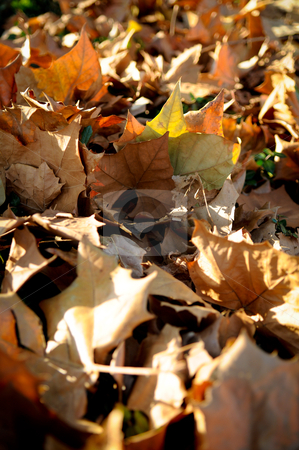 Autumn leaves at sunlight stock photo, brown and yellow dried leaves laying on the ground. by fedebianchi