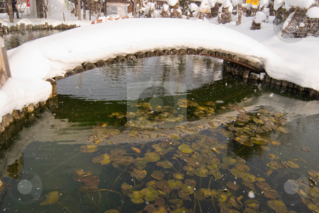 Japanese courtyard with pond and bridge under snow stock photo, Japanese courtyard with pond and bridge under snow. Waterlily are still green in the pond. by Lawren