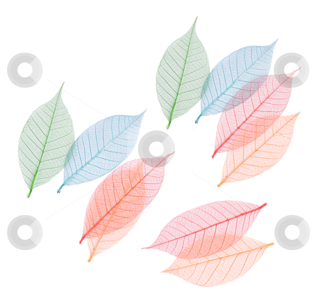 Real leaf with detail vein and various colors stock photo, Real leaf with detail vein and various colors, decoration elements.  by Lawren