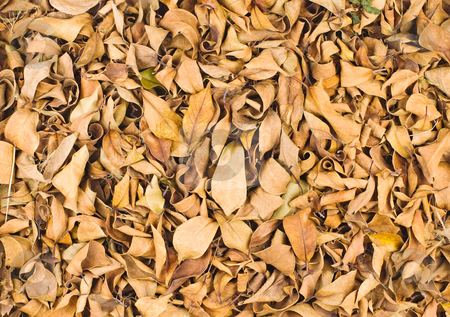 Fallen leaves in winter stock photo, Fallen leaves in winter, full of dry leaves on ground. by Lawren