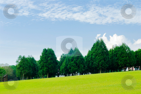 Green grassland, pine trees under blue sky stock photo, Green grassland, pine trees and blue sky by Lawren