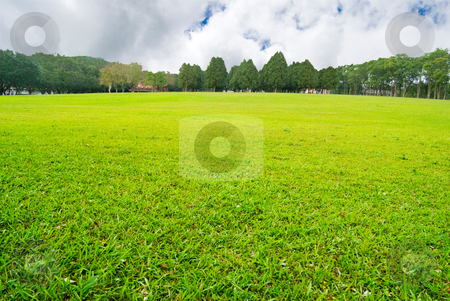 Soft GGreen plain with trees stock photo, Soft GGreen plain with trees far away by Lawren