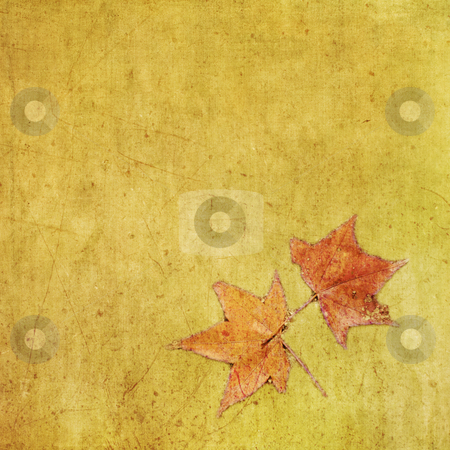 Autumn colorful maple leaf on grungy background stock photo, Autumn colorful maple leaf on grungy background. Textured effect. by Lawren