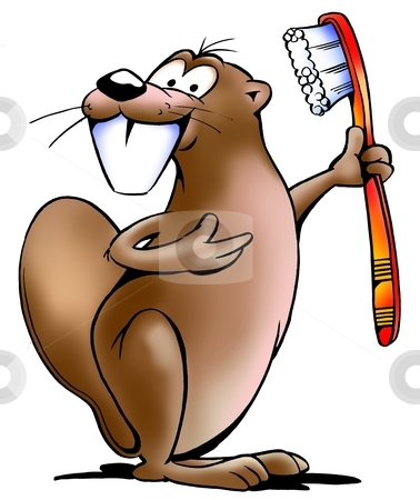Beaver with a toothbrush stock photo, Beaver with a toothbrush  by DrawShop - Poul Carlsen