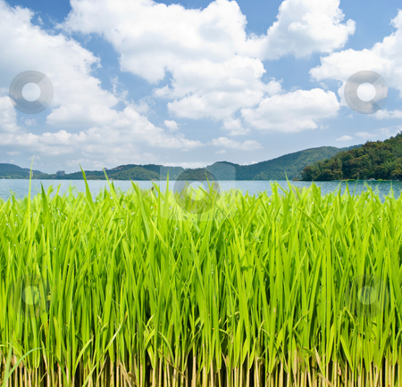 Grassland in front of lake and mountains  stock photo, Grassland in front of lake and mountains under cloudy sky.  by Lawren