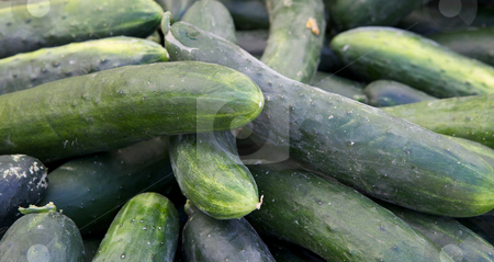 Pile of green cucumbers stock photo, Pile of green cucumbers at the farmers market with soft focus by bobkeenan