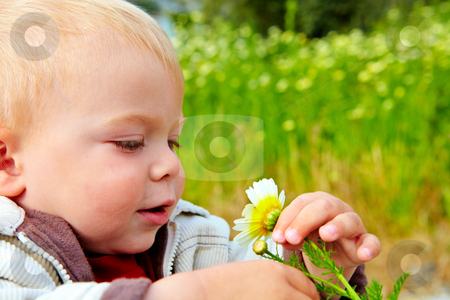 Baby boy and daisy stock photo, small baby boy holding a daisy in his hand in the field of flowers by lubavnel