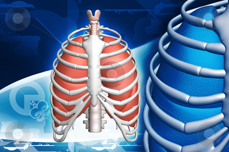 Human lungs and rib stock photo, 	human lungs and rib in color background by dileep