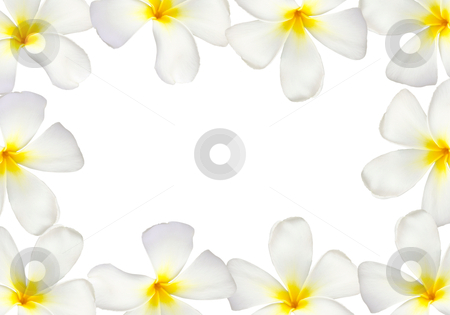 Frangipani flower frame isolated stock photo, Frangipani flower frame isolated on white background by nuchylee