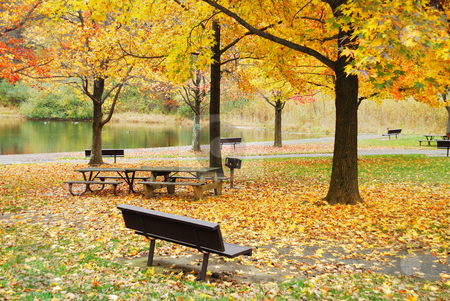 Autumn foliage in park by lake stock photo, Autumn yellow foliage in park with barbeque grill and bench chair by lake by rabbit75_cut