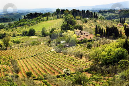 Tuscan Farm Vineyard San Gimignano Tuscany Italy stock photo, Tuscan Farm Vineyard San Gimignano Tuscany Italy by William Perry
