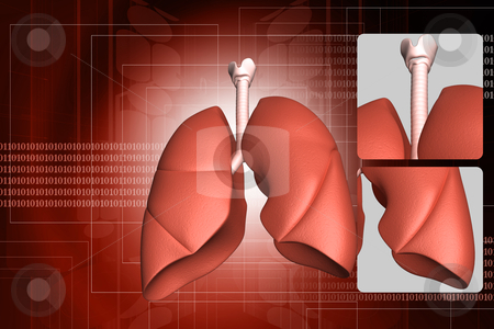 Human lungs stock photo,  and rib	human lungs and rib in color backgrou by dileep