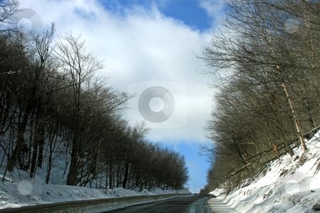 Winter Road stock photo, A road in winter with trees and snow to the sides by Lucy Clark