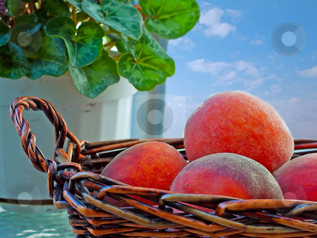 Peaches stock photo, Basket full of peaches with blue sky in the back by Fabio Alcini