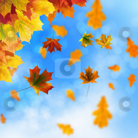 Red and yellow leaves stock photo, Red and yellow leaves against a bright blue sky. Bokeh effect. by Sergey Nivens