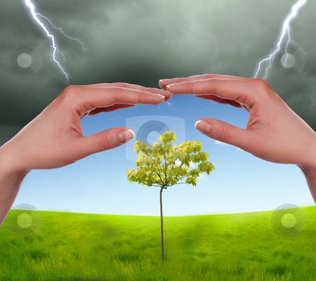 Human hands protecting tree stock photo, human hands protecting tree from thunderstorm and lighting by Sergey Nivens