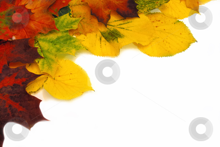 Colorful autumn leaves stock photo, Colorful fall leaves isolated on white background by zagart