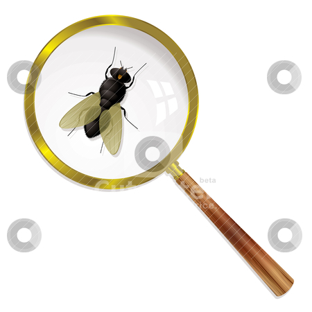 Magnify fly stock vector clipart, Fly magnified under a glass with wings and body by Michael Travers